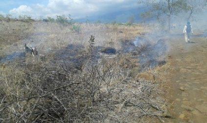 Diduga Bakar Hutan dan Rusak Bibit kayu, 35 Orang diamankan